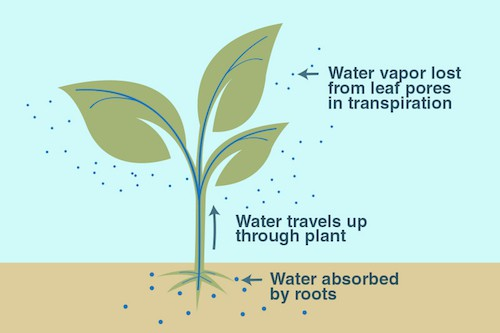 DIY under $5 elementary school plant transpiration experiment – Cool Kids Arena